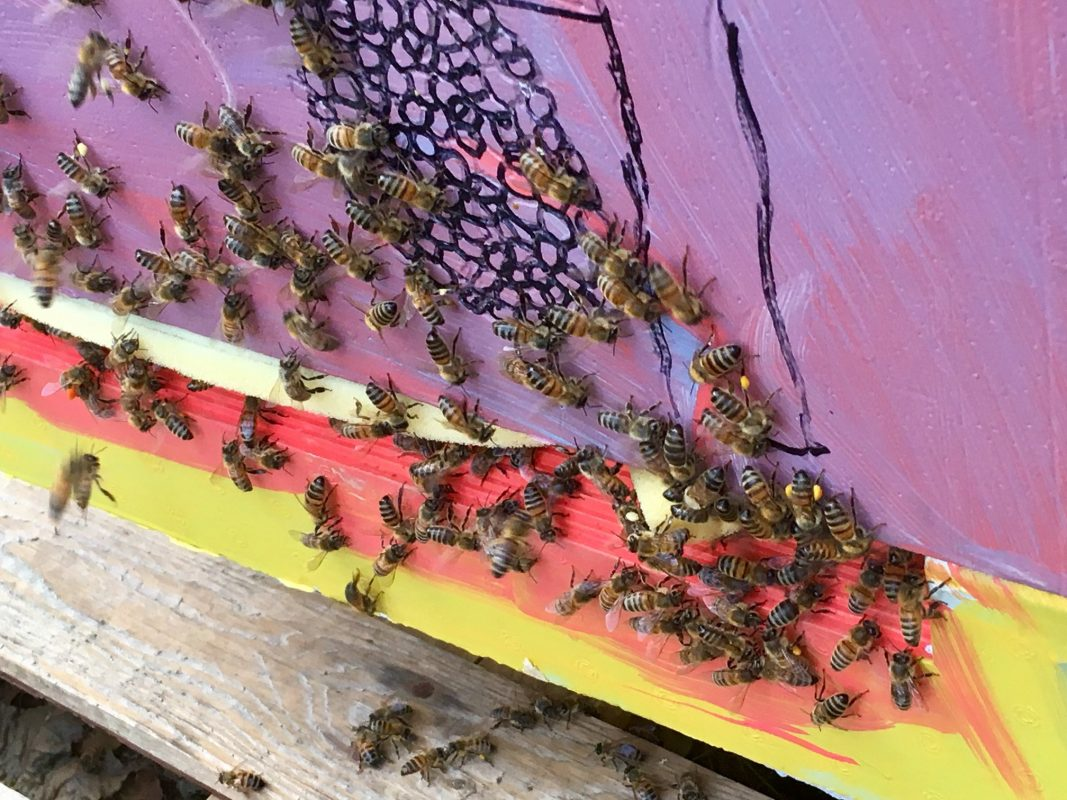 Honey bees at South Downs Leisure